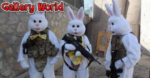 coelhos-bomba