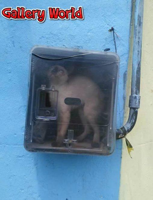 gato-de-luz